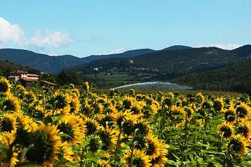 Sunflowers 2 von Jodi van Dam