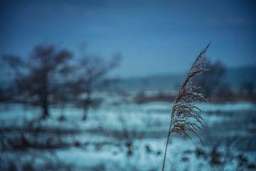 Frozen life van Michel de Jonge