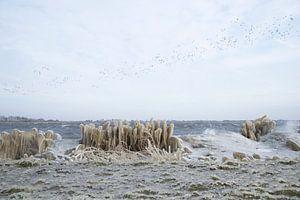 Vorst en vogels bij het Alkmaardermeer