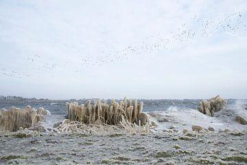 Vorst en vogels bij het Alkmaardermeer van Barbara Brolsma