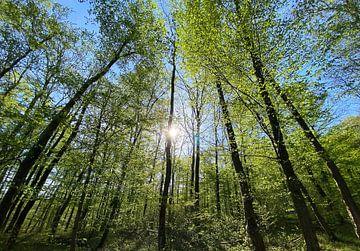 La forêt contre la lumière