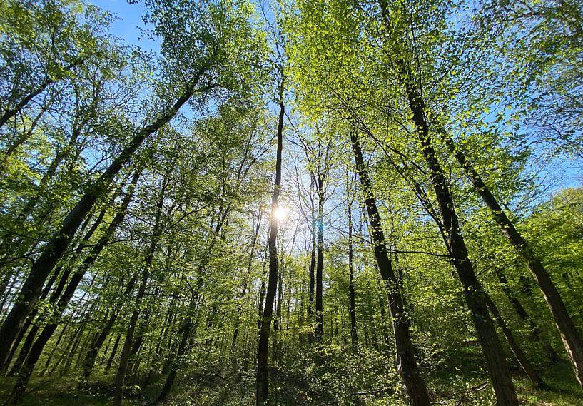 Wald im Gegenlicht von Markus Jerko