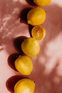 Sommerszene, gelbe Zitronen auf rosa Hintergrund