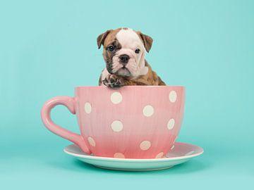 Pokal der Bulldogge von Elles Rijsdijk