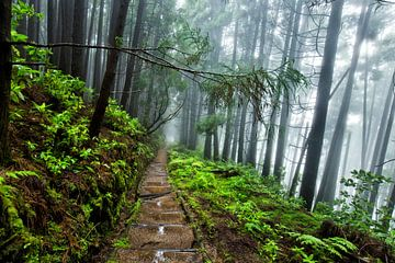 Regen in het bos, Pico da Vara, Sao Miguel, Azoren, Portugal van Sebastian Rollé - travel, nature & landscape photography