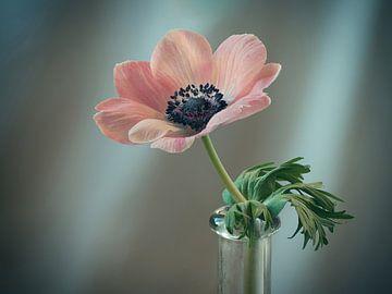 Anemoom roze van Ineke Nientied