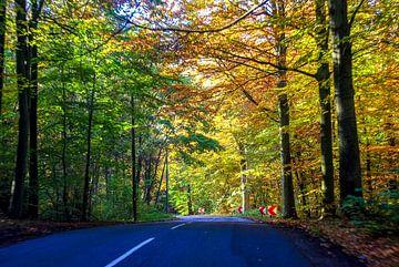 Herfst bos rijden van Norbert Sülzner