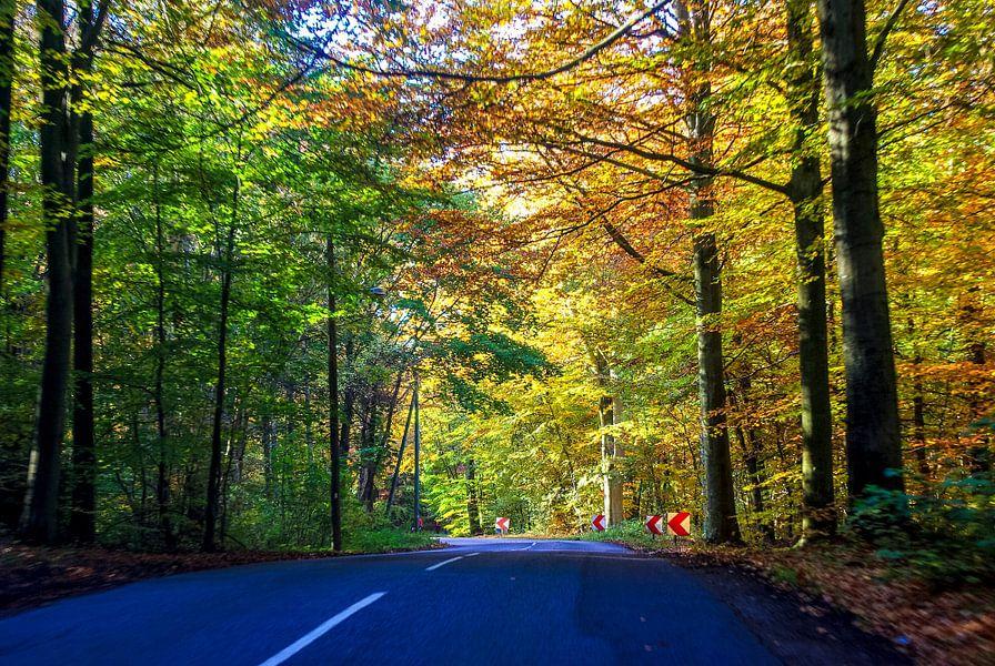 Herfst bos rijden