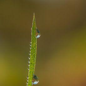 Waterdruppels op grasspriet van Moetwil en van Dijk - Fotografie