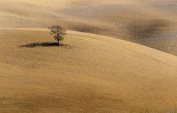 Toscaans bruin van Guy Lambrechts