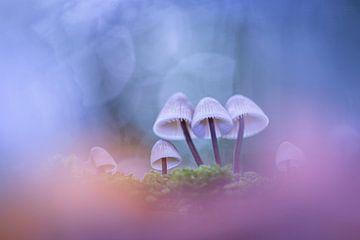 Pilze in den Wolken von Erik Veldkamp