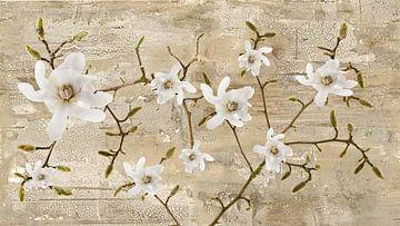branche de magnolia sur Klaartje Majoor
