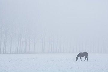 Grazend paard op een koude dag. sur Rens Kromhout