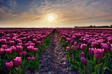 Tulpenveld bij zonsondergang von John Leeninga