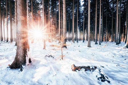 Winterwald mit Sonnenschein van Oliver Henze