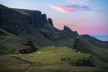 De schapen van de Quiraing van Roelof Nijholt