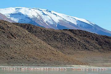 flamingo's op hoogvlakte Bolivia van Marieke Funke
