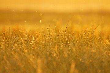 Fields of gold van Lennard Kazen