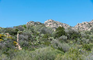 het landschap van sardinie ook wel costa esmeralda genoemd van Compuinfoto .