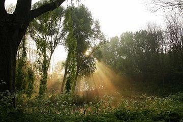Mystiek sfeertje in het park van Bob Bleeker