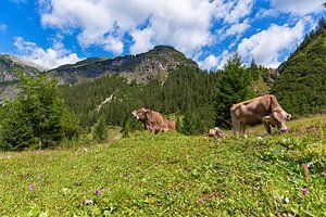 Vaches dans les montagnes d'Autriche sur Robin van Maanen