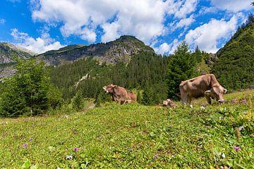 Koeien in de bergen van Oostenrijk