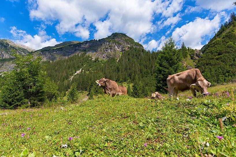 Koeien in de bergen van Oostenrijk van Robin van Maanen