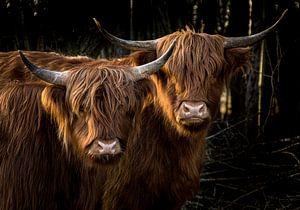 Zwillinge von Koen Boelrijk Photography