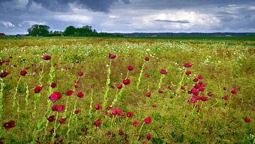 Purple poppies field sur Hans Kwaspen