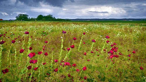 Artistieke bewerking van veld paarse klaprozen van Hans Kwaspen