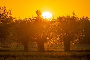 Sonnenaufgang von Peter Deschepper