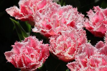 Blumen von Gabrielle van Rhenen