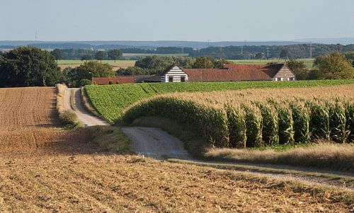 Limburgse heuvels van