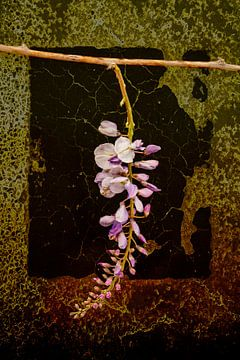 Nature morte avec des fleurs de glycine sur Alie Ekkelenkamp