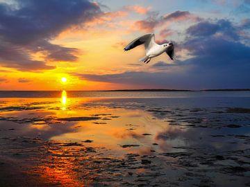 Möwe fliegt über das Wattenmeer an der Nordsee von Animaflora PicsStock
