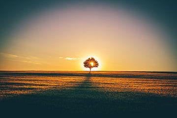 Eenzame boom in het veld van Fotos by Jan Wehnert