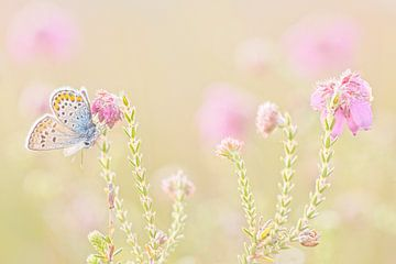 Heidekraut blau von Wilma van der Veen