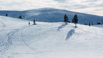 Schneelandschaft Finnisch-Lappland || Polarkreis, Finnland von Suzanne Spijkers