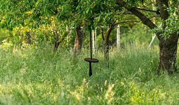 Schommeling van een houten schijf hangt aan een touw in een wilde tuin van Hans-Jürgen Janda