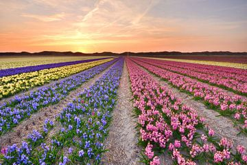 Hyazinthen bei Sonnenuntergang von John Leeninga