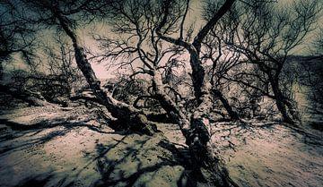 0724 Creepy Dunes van Adrien Hendrickx