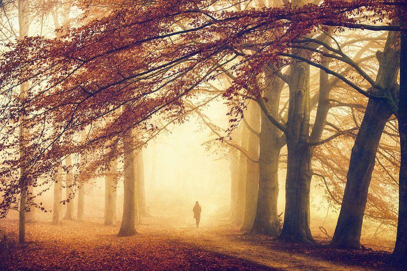 Herbst ohne Gedanken von Lars van de Goor