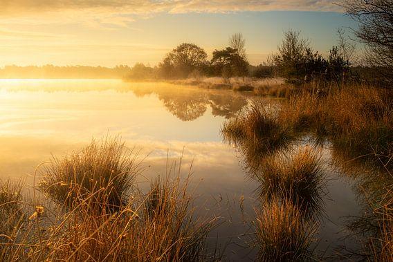 Morgennebel über einem kleinen See im Wald