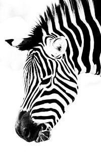 Zebra hoofd tot het minimum beperkt