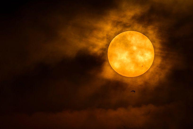 De zon van Richard Guijt