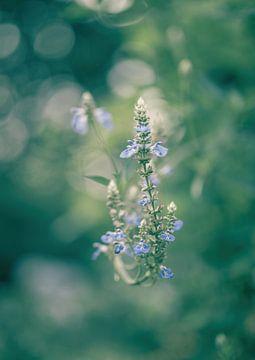 Blumen Teil 186 von Tania Perneel