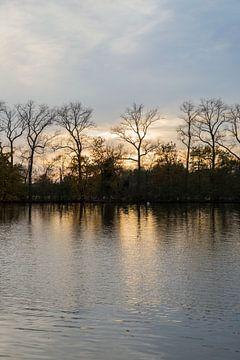 Bomen op het water van Lina Heirwegh