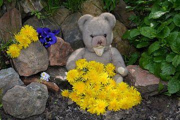 Paardebloem Teddybeer van Claudia Evans