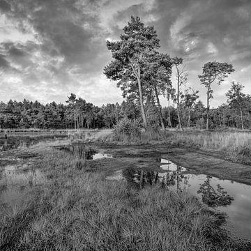 Rustige heide met een water pond_3 van Tony Vingerhoets