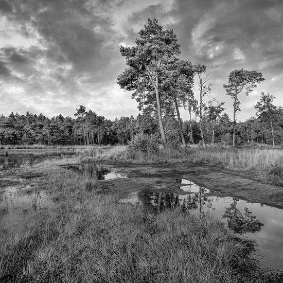 Rustige heide met een water pond_3